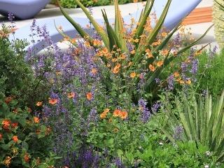 VIDEO Oživte svoju záhradu