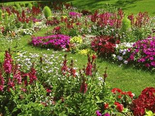 Vkaždej záhrade by malo