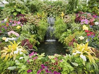 Rozžiarte zimnú záhradu pestrými