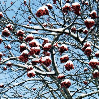 Záhrada v zime alebo