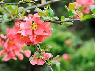 10 najkrajších kvitnúcich drevín