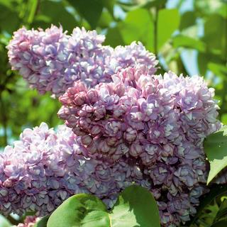 Prírodná aromaterapia