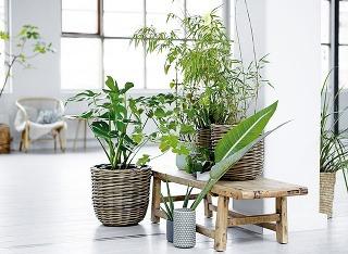 Stredne vysoké anižšie rastliny