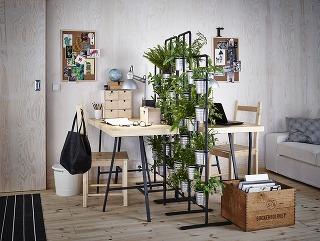 Akými rastlinami dotvoriť pracovňu?