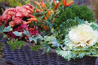 Jeseň je skvelá na vytváranie pestrých kvetinových kompozícií. Trendom sú prirodzene pôsobiace kombinované výsadby.
