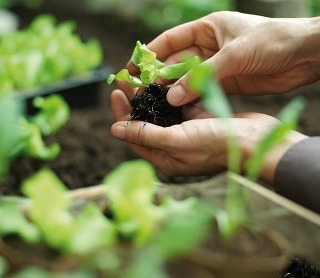 Ako prebrať záhradku zo