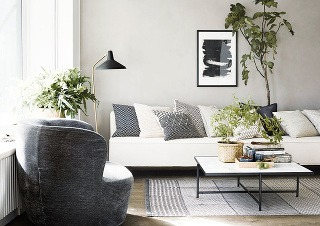 Na parapete, stole či stene – zeleň sa pri vhodných podmienkach udomácni prakticky kdekoľvek.