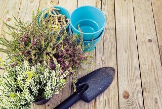 12 rastlín, ktoré spoľahlivo vyfarbia vašu záhradu na jeseň