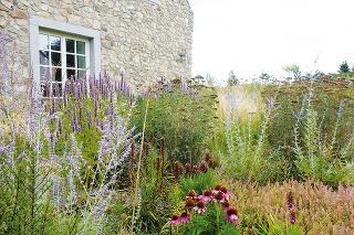 Purpurová trvalková zmes vo vidieckej záhrade je komponovaná sprevahou aromatických ajedlých rastlín.