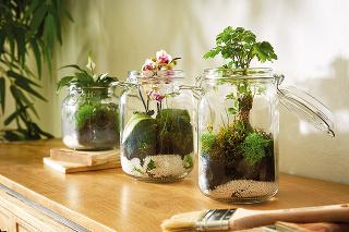 Rastlinné terárium