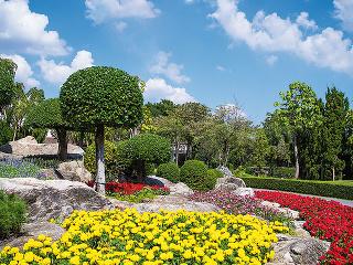 Strom vzáhrade by mal byť atraktívny adominantný. Do malej záhrady sú vhodné aj druhy, ktoré sú zelené počas celého roka, ideálne sú dreviny sguľovitou korunou.