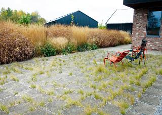 Vyššie trávy atrvalky fyzicky avizuálne oddeľujú priestor, pričom na pozorovateľa pôsobia ako živý obraz textúr afarieb. Vytvárajú tak príjemné zákutie na pobyt arelax.