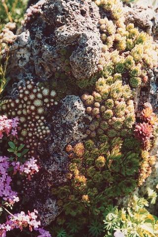 Travertín posiaty množstvom skalníc. V záhrade je takýchto skvostov niekoľko.