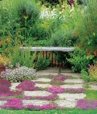 Táto bylinková záhradka ponúka bohatý vizuálny i chuťový zážitok. Medzi kamennými platňami sa rozťahuje popínavý tymian. Výrazne ružové kvety priťahujú pozornosť včiel.