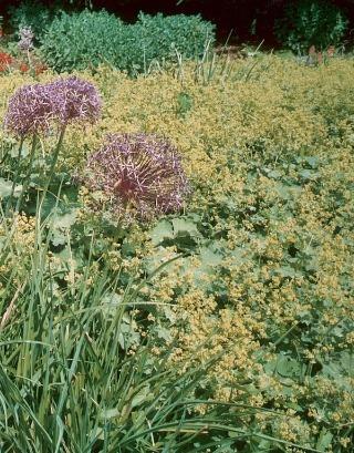 Bylinky, liečivé rastliny a koreniny spravidla vyžadujú nezatienenú, slnečnú polohu.