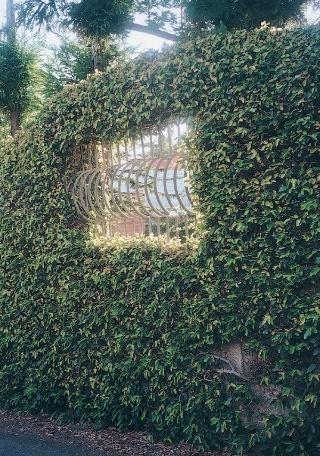Dreviny v záhrade (4.