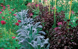 Moderná zeleninová záhrada alebo