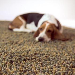 Ručne viazaný koberec z kolekcie Seagrass zo 100 % vlny. Dizajn Nani Marquina, výrobca NANIMARQUINA. Výška vlasu 60 mm, rozmer 170 × 240 cm. Cena 84 925 Sk. Predáva TriForm Factory.