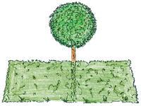 Úpravou živých plotov sa