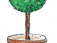 Zo strihaných drevín v