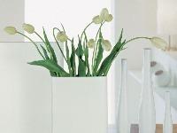 Vázy Grase rôznych veľkostí