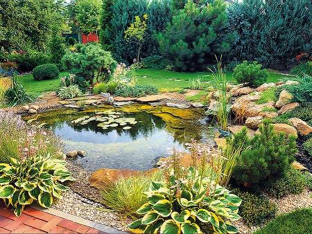 Lekná ainé vodné rastliny