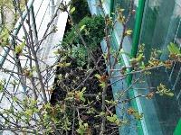 Balkón zasypaný kvetmi