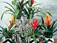 Rastliny v kuchyni a
