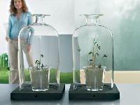 Kvety v objatí skla