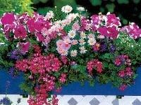 Záhrada na balkóne alebo
