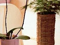 Niektorým druhom orchideí vyhovuje