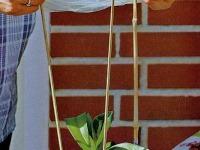 Črepník s orchideou prikryte