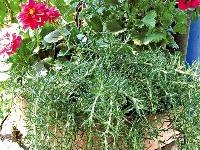 Voňavé kráľovstvo byliniek