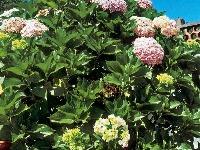 Kvetinová záhrada na balkóne: