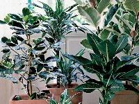 Izbové rastliny s farebnými