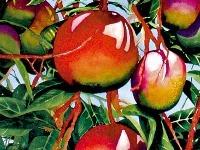 Pestovanie exotických rastlín