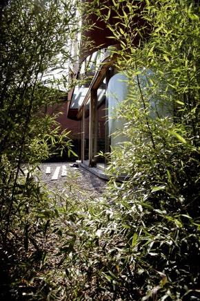Bambusový plot narástol, aby