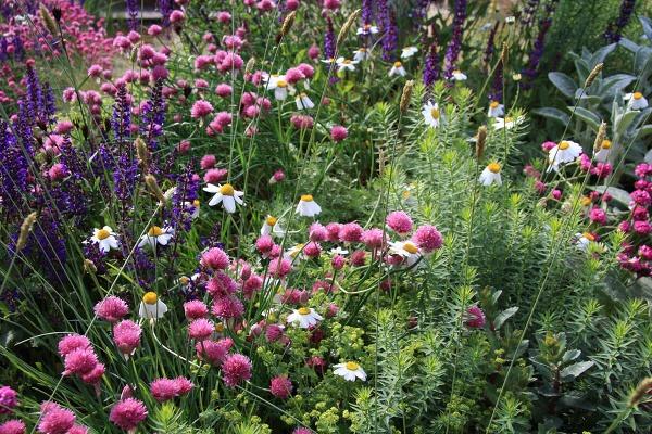 Záhradné ekoleto