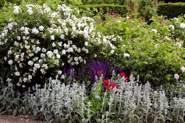 Na kvetinovom záhone, najmä