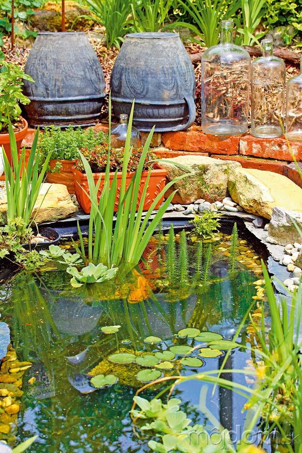 Malé záhradné jazierko privítali
