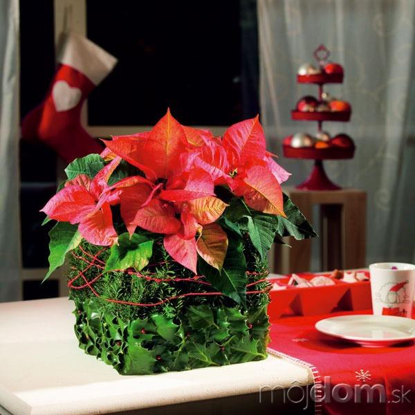 Červené listene tejto vianočnej