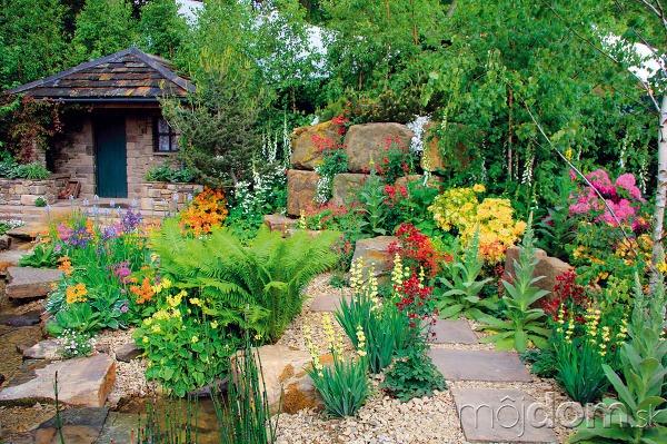Aké rastliny do kamennej