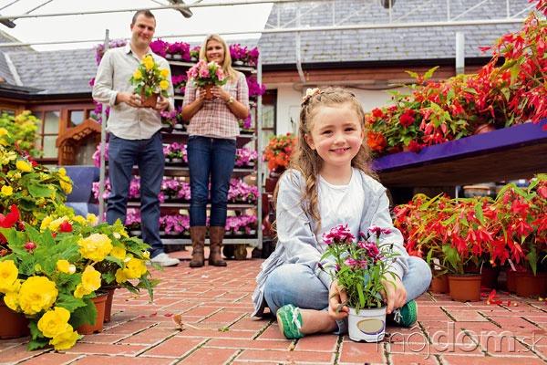 Rastliny pre alergikov Rastliny