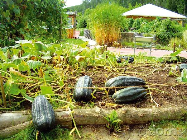 Ako záhradníčiť eko