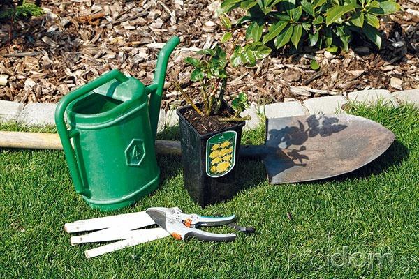 Pripravte si rastlinu apotrebné