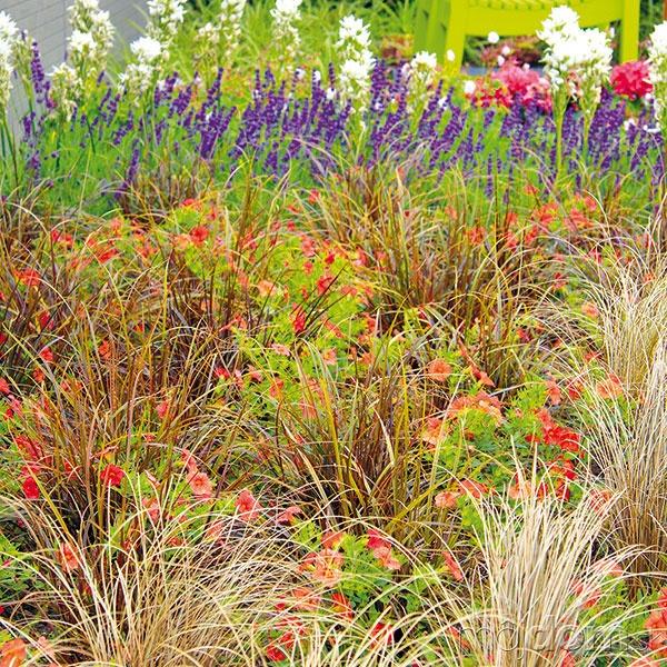 Rozmanité okrasné trávy môžu