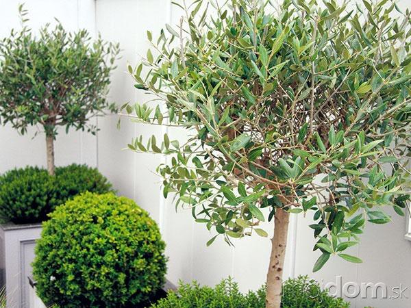 Ak pestujete exotické rastliny