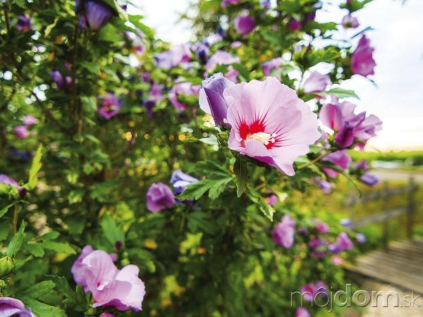 V lete môže záhradu