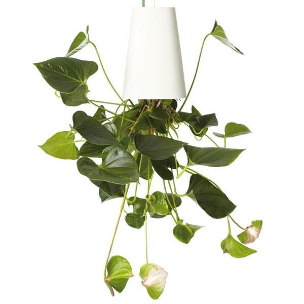 Zaujímavou formou pestovania zelene