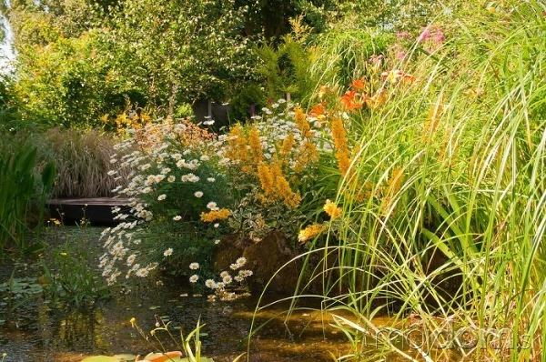 Jazierka v anglickej záhrade